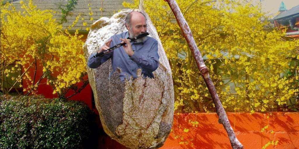 Fintan Vallely Cocoon Image